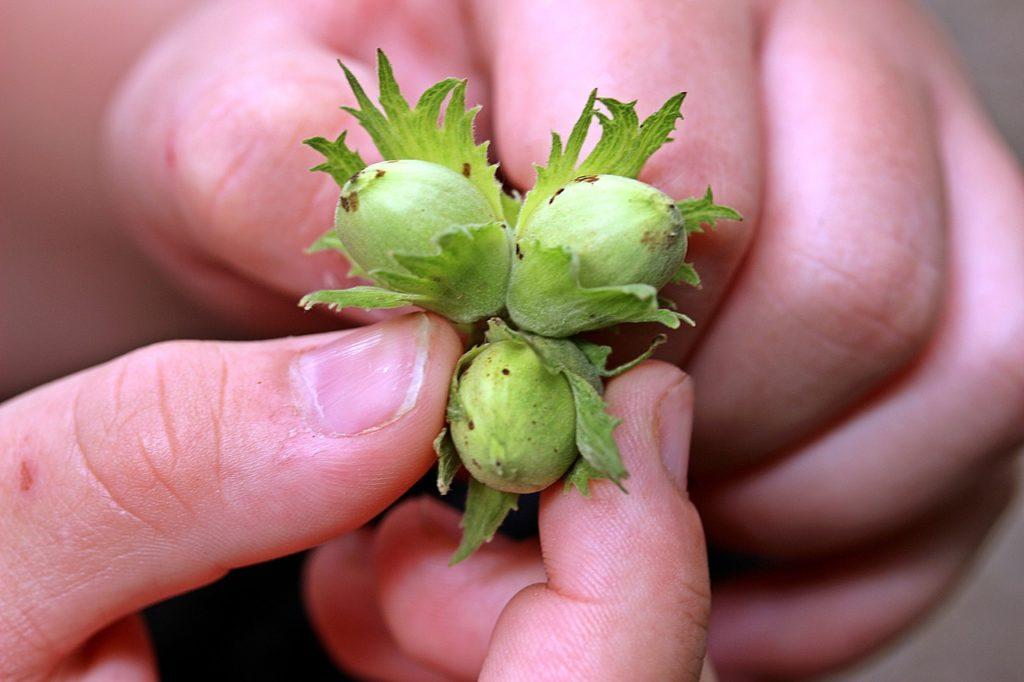nuts-1606254_1280